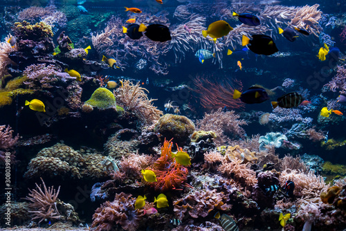 Fototapety, obrazy: underwater coral reef landscape with colorful fish and marine life