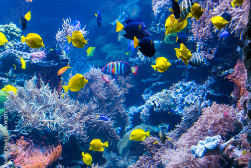 Photo Underwater Scene With Coral Reef And Tropical Fish