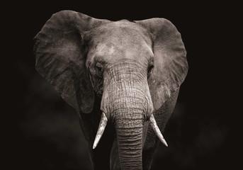 Izbliza glave slona