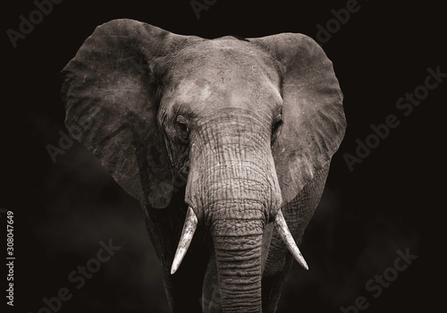 Canvas Print Close up of an elephant head