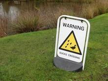 Warning Ducks Crossing Sign Be...