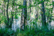 A Magical Swamp With Trees Sta...