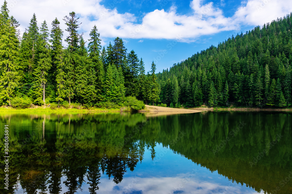 Fototapeta mountain lake in summertime. great outdoor nature scenery. coniferous forest with tall trees on the shore reflecting in clear water. deep blue sky with clouds. beautiful landscape