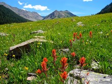 Indian Paintbrush Colorado Mountains