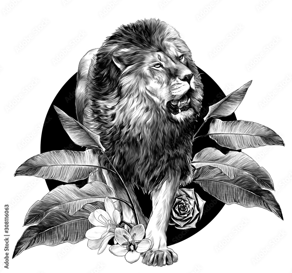 Fototapeta full-length lion walking on background composition of tropical plant leaves and flowers, sketch vector graphics monochrome illustration on white background