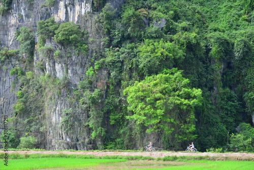 Fotografie, Obraz trees on cliff