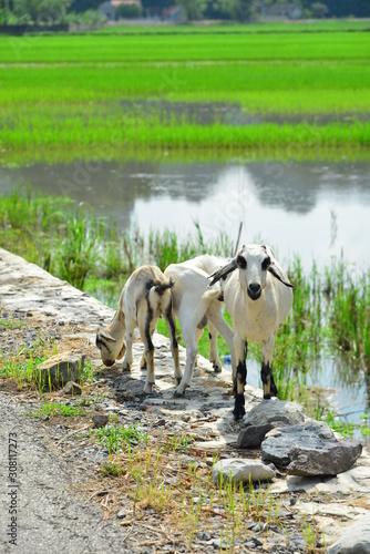 Fotografie, Obraz sheeps