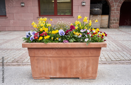 Brown plastic flower pot with flowers of daffodils, daisies and violets in the background of the building