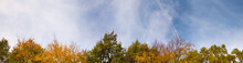Autumn Time. Colorful Leaves Of Trees Tops On Sky Background. Super Wide Angle Natural Background, Banner Format