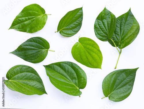 Green betel leaves, Fresh piper betle on white Canvas Print