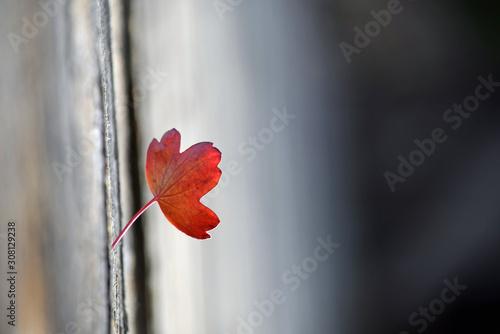 Leaf Red - 308129238