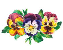 Bouquet Of Colored Pansies Flowers On Isolated White Background, Watercolor Hand Drawing. Stock Illustration.