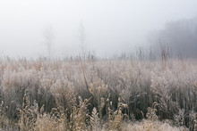 Frosted, Autumn Tall Grass Pra...