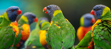 Rainbow Lorikeets Out In Nature During The Day.