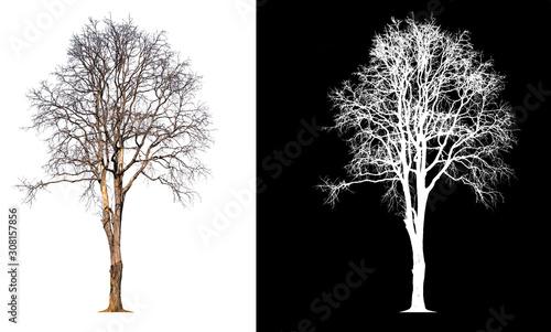 Valokuvatapetti isolated death tree on transparent picture background