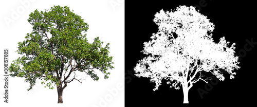 Fotomural  isolated tree on white background with clipping path