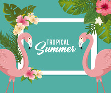 Tropical Summer Poster With Flamingos And Flowers Vector Illustration Design
