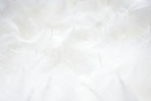 羽根 背景素材