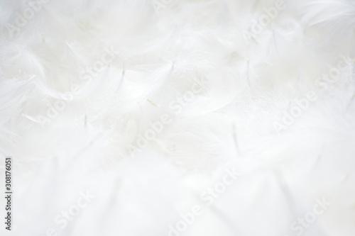 Obraz 羽根 背景素材 - fototapety do salonu