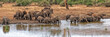 canvas print picture - elephant group drinking at the pool in kruger park south africa huge panorama