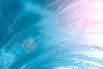Blue color trends feather texture pattern background,Light pink