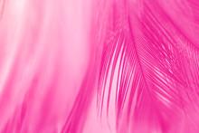 Beautiful Pink Magenta Feather...
