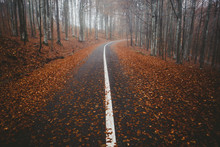 Empty Asphatl Road In Forest I...