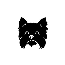 Yorkshire Terrier - Isolated V...