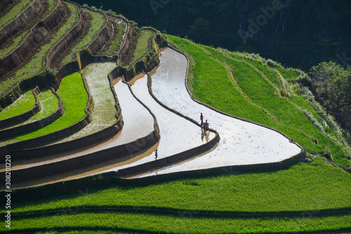 Terraced rice field in Northwest Vietnam