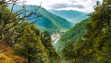 Mountain Forest In Bhutan, The...