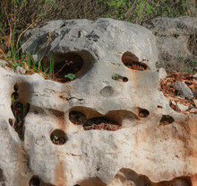 Natural Skull Shaped Sandstone...