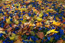 Abstract Autumn Colorful Backg...