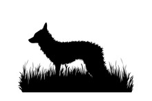Vector Silhouette Of Fox In The Grass On White Background. Symbol Of Animal, Zoo, Forest, Safari, Wild, Nature, Park, Garden.