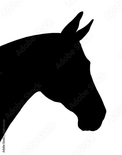 Beautiful horse. Silhouette portrait of a horse. Equine drawing.  Wall mural