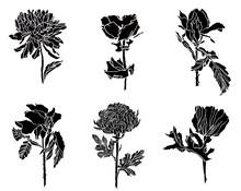 Black Set Of Different Flowers...