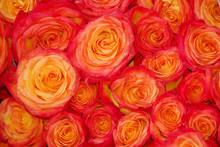 Red Orange Rose Flower Cluster