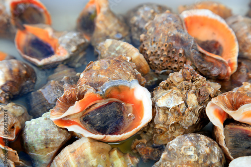 Conch piled up Fototapet