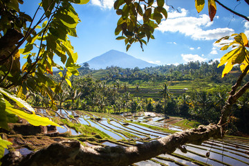 scenic panorama view of rice terraces with volcano in bali indonesia
