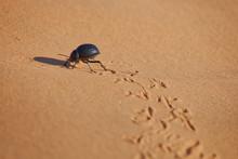 Hologram Beetle In Desert
