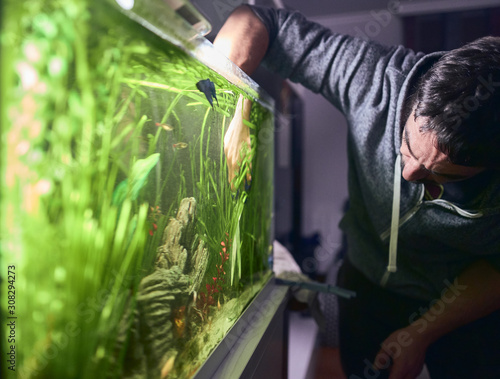 Young man pruning the plants in his aquarium. Canvas Print