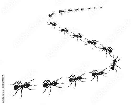 Worker ants marching in a line. ants road, Vector illustration Canvas Print
