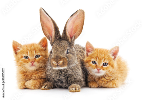 Red kittens and bunny. Tableau sur Toile