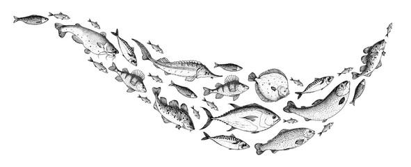 Zbirka skica ribe. Ručno nacrtana vektorska ilustracija. Vektor ilustracije jata riba. Ilustracija jelovnika s hranom. Set ručno nacrtanih riba. Gravirani stil. Morska i riječna riba