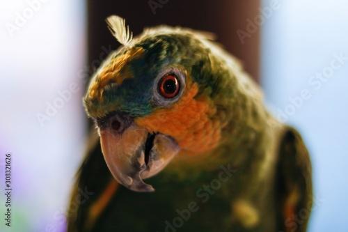 Photo  portrait of a parrot