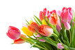 Bouquet of colorful tulips on white background