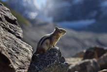 Chipmunk In Banff National Park, Canada