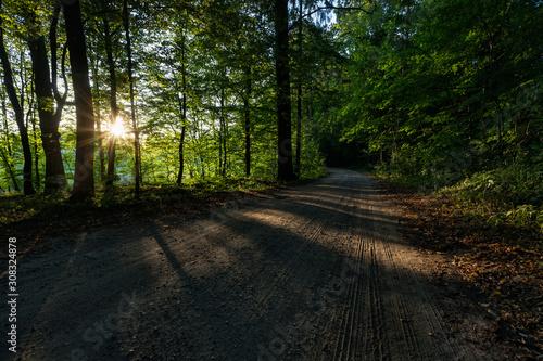 Obraz Sunset in the wood, Las Miejski, Giżycko, Poland - fototapety do salonu