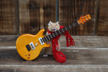 Сute Mouse Plays Guitar, Sing...
