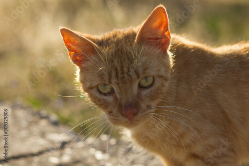 Cat in sunlight in front of grass