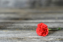 Red Carnation Flower On Wooden Background With Copy Space